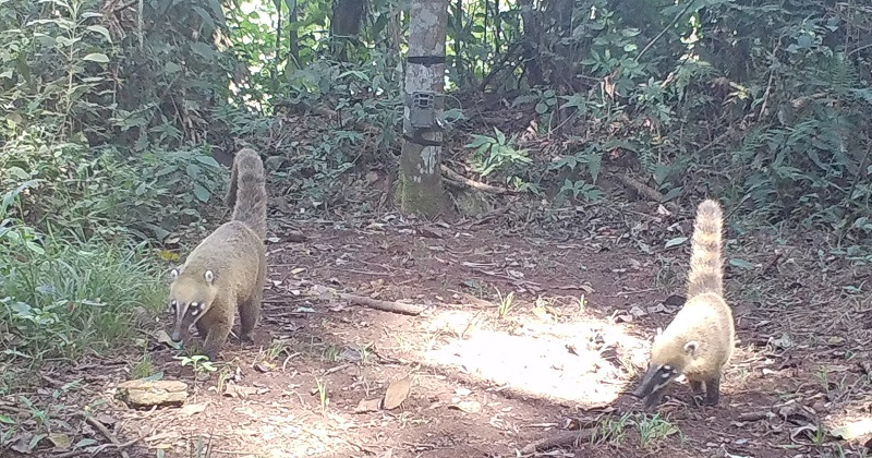 Animais voltam a ser observados na região que foi devastada pela tragédia de Brumadinho