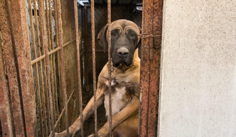 Coreia do Sul planeja proibição a comércio de consumo de carne de cães