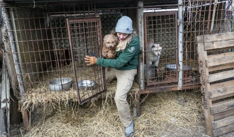 Coreia do Sul planeja proibir comércio de consumo de carne de cães