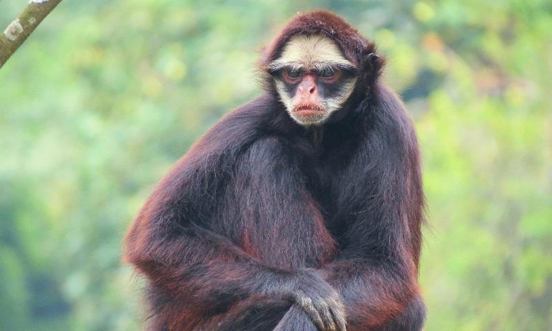 Mais de 90% das 14 mil espécies de animais e plantas da Amazônia já foram impactadas por incêndios