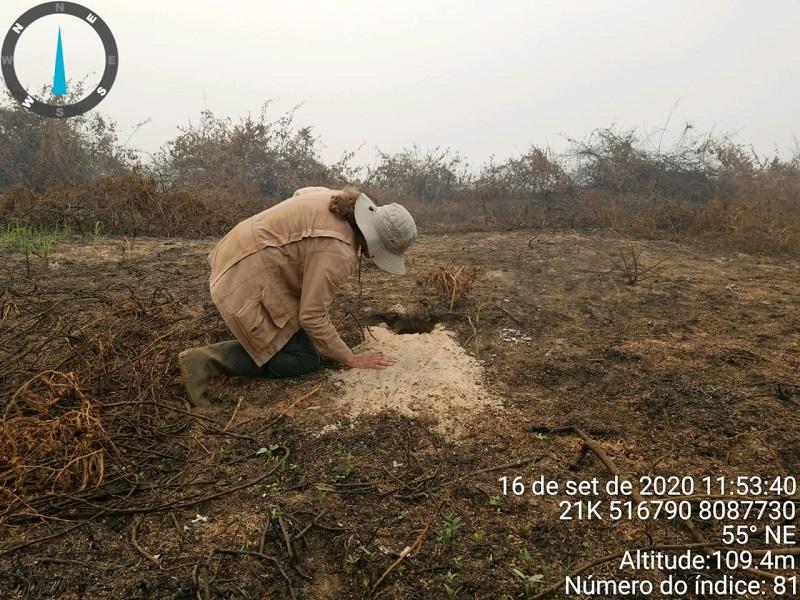 Incêndios de 2020 no Pantanal mataram 17 milhões de animais