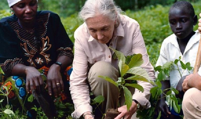 Jane Goodall se une a campanha pelo plantio de um trilhão de árvores até 2030