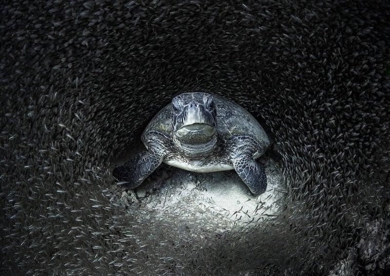 A beleza da vida marinha e os perigos que ameaçam o equilíbrio dos oceanos em 16 imagens deslumbrantes