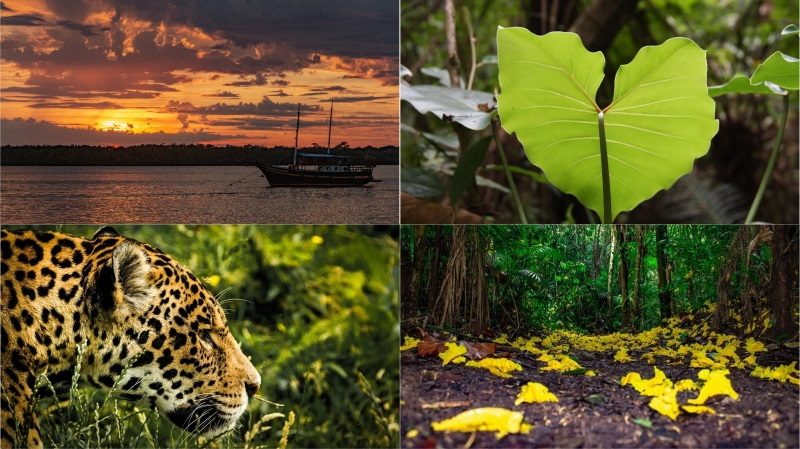 Paranaenses e turistas agora podem visitar a Reserva Natural Guaricica, no coração da Mata Atlântica, lar de espécies em risco de extinção, como a onça-pintada