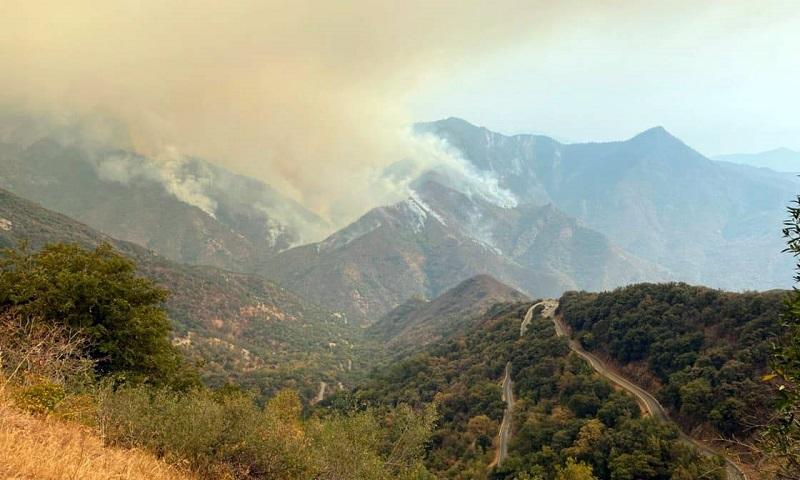 Maior árvore do mundo, sequoia gigante da Califórnia, é protegida com cobertor contra incêndio que se aproxima