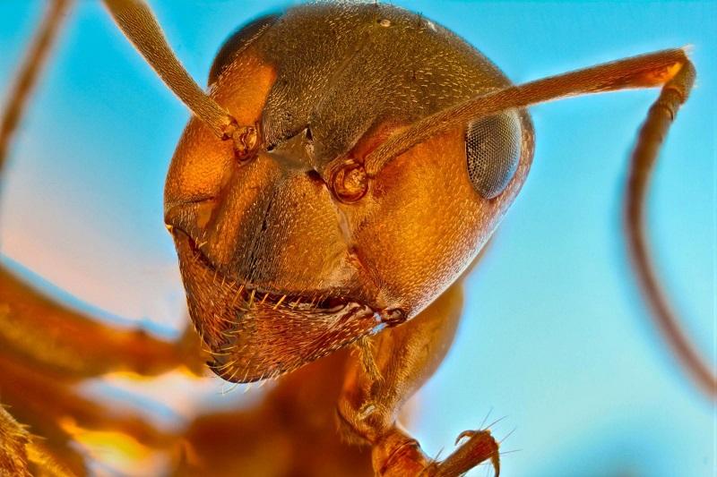 "Vencedores do concurso ""Small World"" revelam as belezas microscópicas do mundo natural"