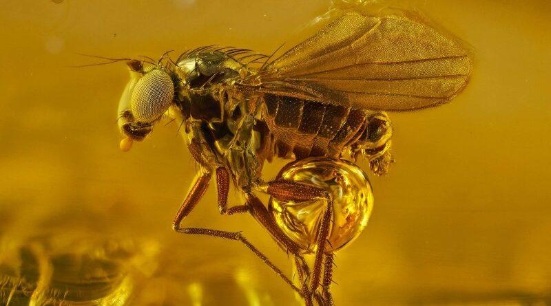 "Vencedores do concurso ""Small World"" revelam belezas microscópicas do mundo natural"