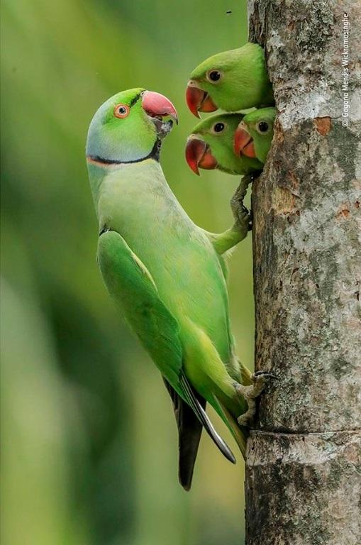Wildlife Photographer of the Year: uma espiadela nos destaques da edição 2021