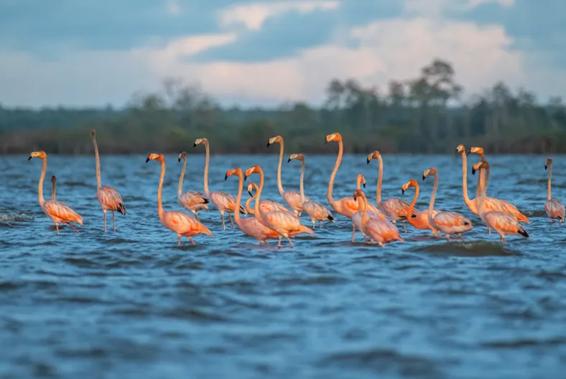 Imagens lindas celebram o Dia Mundial dos Animais e nos lembram porque precisamos lutar tanto pela preservação da fauna do planeta