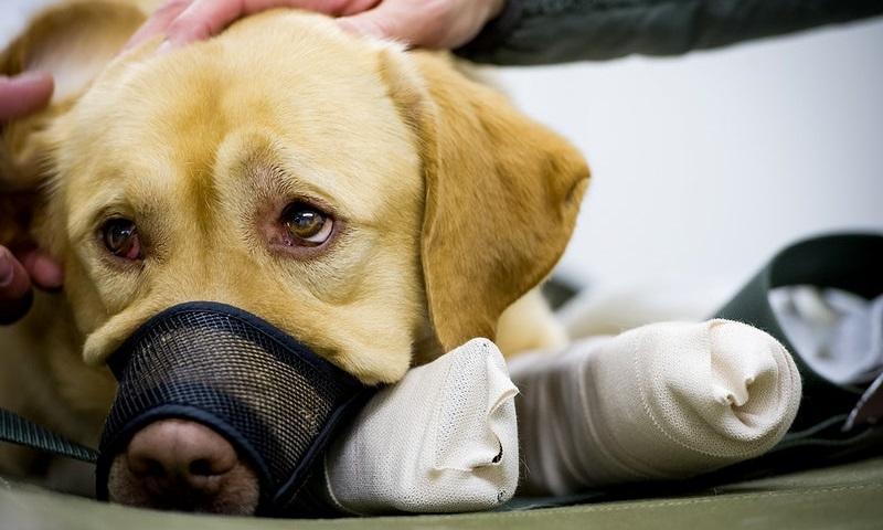 Belo Horizonte inaugura o primeiro Instituto Médico Legal Veterinário do país, que ajudará no combate a crimes de maus-tratos contra animais