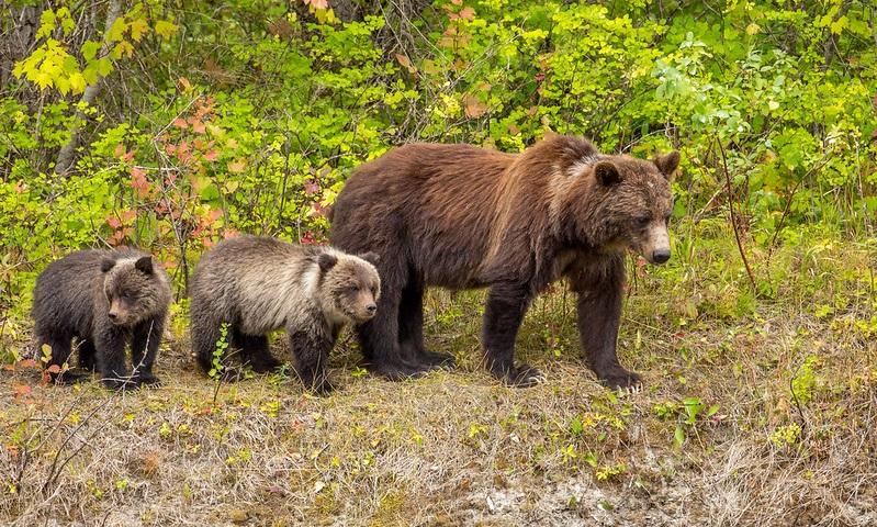 Mulher que ficou perto de ursa com filhotes para tirar fotos recebe sentença de prisão e multa de 2 mil dólares