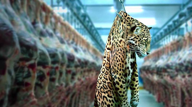 Onça-pintada em frigorífico ilustra campanha mundial do Greenpeace contra empresas que desmatam